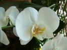 Blumen Suedtirol_10