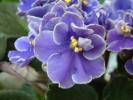 Blumen Suedtirol_11