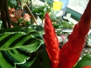 Blumen Suedtirol_12
