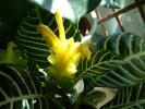 Blumen Suedtirol_13