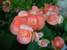 Blumen Suedtirol_14