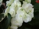 Blumen Suedtirol_15