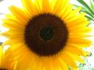 Blumen Suedtirol_16