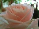 Blumen Suedtirol_17