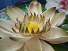 Blumen Suedtirol_18