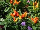 Blumen Suedtirol_2