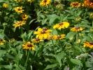 Blumen Suedtirol_3