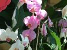 Blumen Suedtirol_4