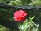 Blumen Suedtirol_5