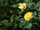 Blumen Suedtirol_6