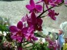 Blumen Suedtirol_9